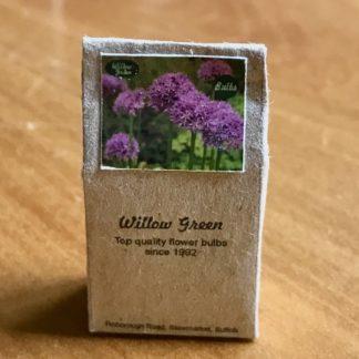 Blumenzwiebeln (Tüte, Zierlauch lila). Handarbeit/England.